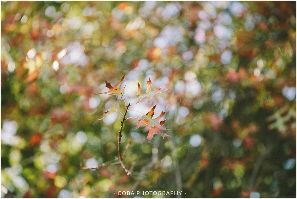 Cobus & Annerie - Towerbosch - Coba Photography (5)