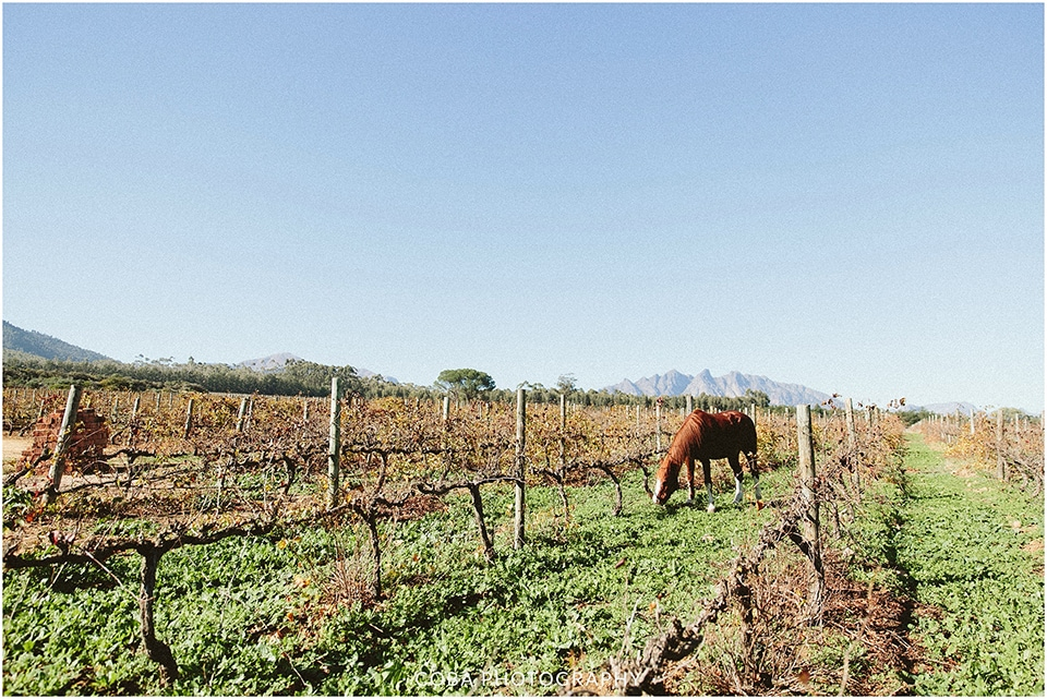 Carlo & Nicolette - Langkloof Roses - Coba Photography (2)